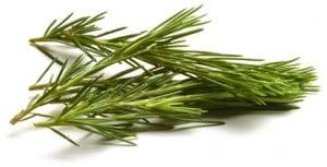 Pinus Fyrreslgten Pine Beintbaam Sosna Sosna Pino Pin